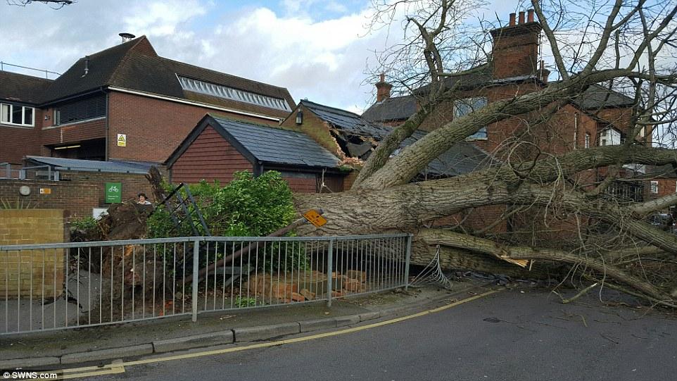 tree damage, storm, wind damage, storm claim, storm insurance claim, insurance claim